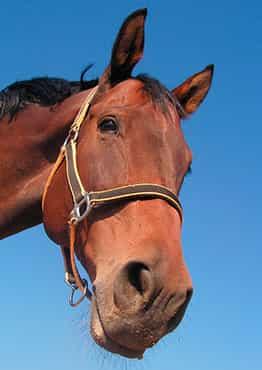 Rutas a caballo por el campo charro