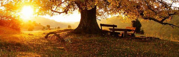 Ya está aquí el otoño