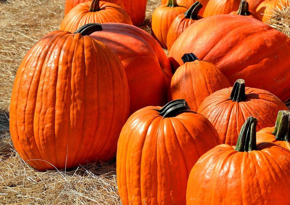 verdadero halloween