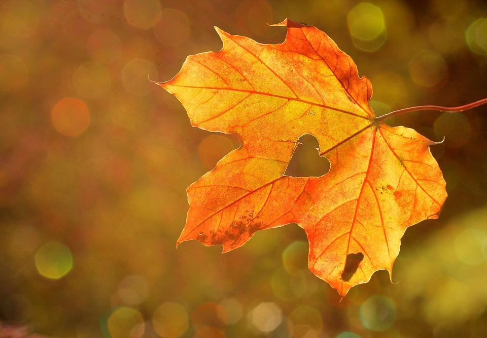 Planes en otoño